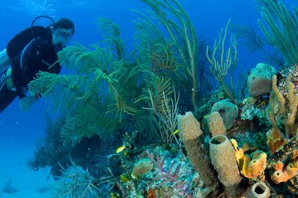 Caribbean Getaway - Bahamas