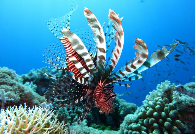 Snorkelling in Anguilla