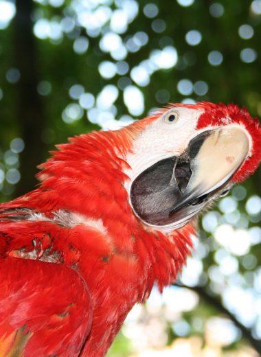 bird watching in jamaica