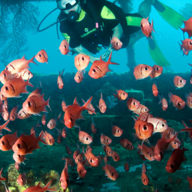 Snorkeling in St. Lucia_ Explore St. Lucia's Underwater World - Foodica