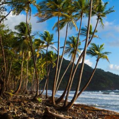 Endless Caribbean - Sa Ka Fête Dominica Highlights Rich and Vibrant Culture