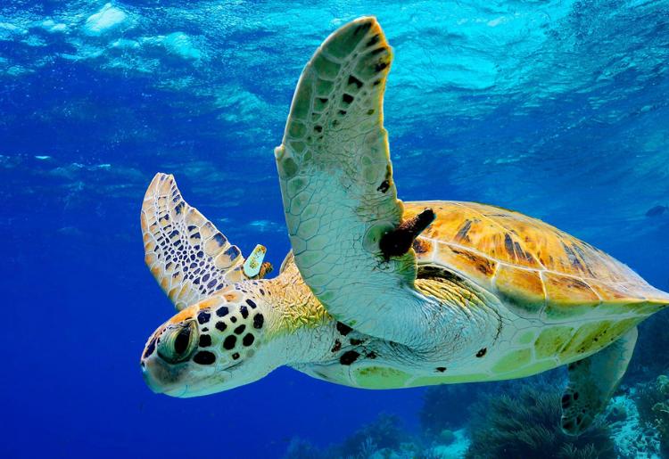 Endless Caribbean - The Deep Blue Sea_ A Bonaire Diving Itinerary