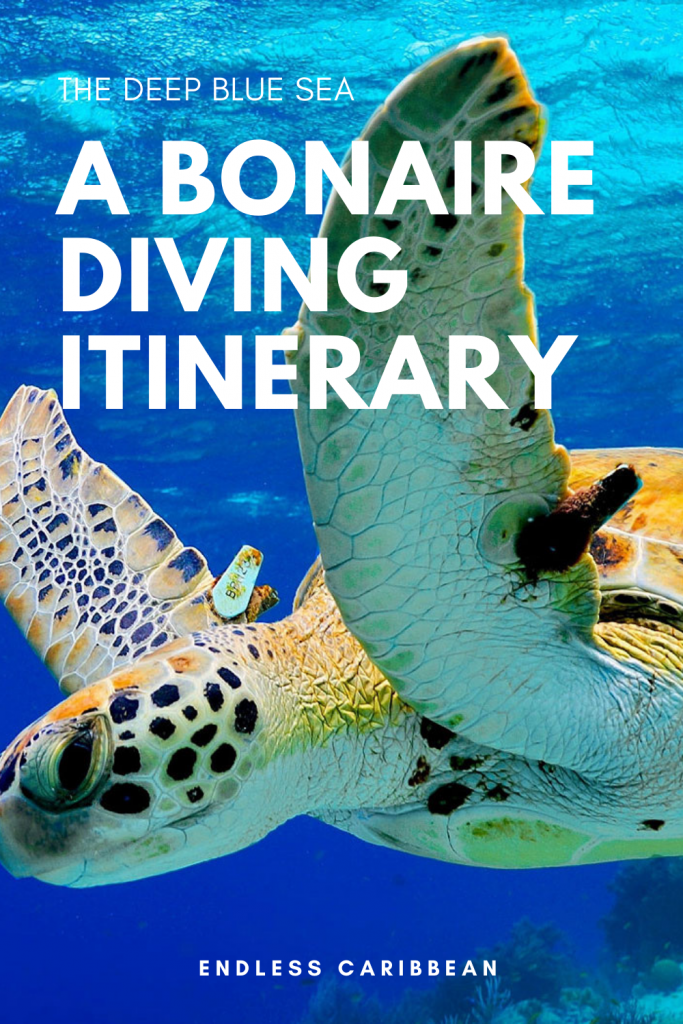The Deep Blue Sea A Bonaire Diving Itinerary