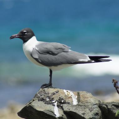 Endless Caribbean - Wild, Wildlife in the British Virgin Islands