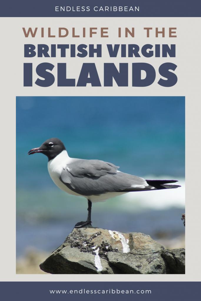 Pinterest - Wild, Wildlife in the British Virgin Islands